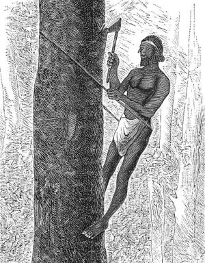This engraving from 1881 demonstrates the climbing technique with rope and hatchet that puzzled the Dutch so.